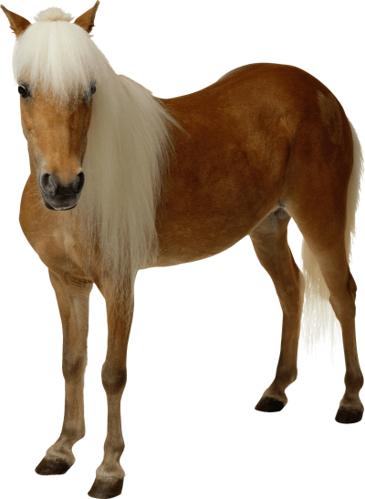 Clipart Brown Horse Png Image Download Picture Transparent Background