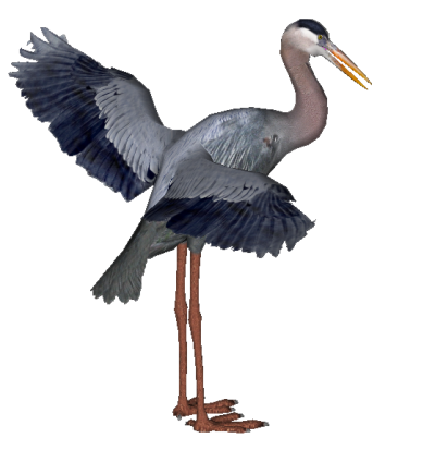 Heron PNG HD