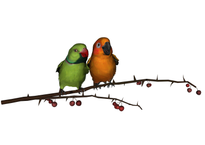 Love Birds Download Png