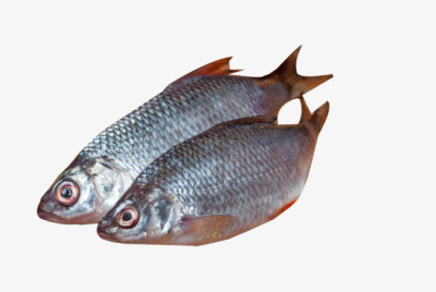 Two Light Black Spotted Fish, Fish Clipart, Seafood, Food PNG and ...
