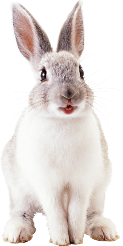 white-cute-rabbit