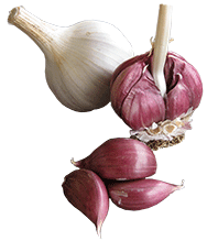 background-Garlic-transparent