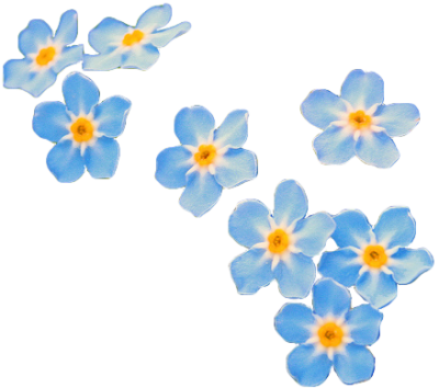 Forget Me Not Transparent
