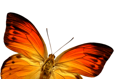 Orange Butterfly Png Image Butterflies Download