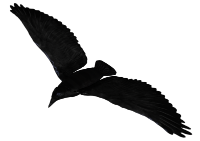 Raven Flying PNG Pic