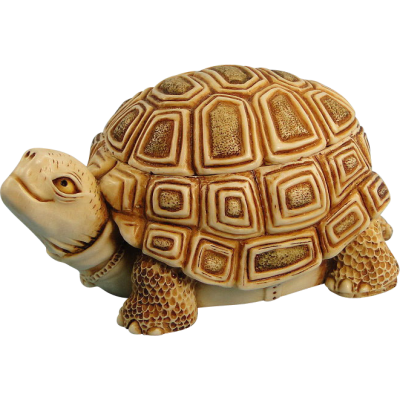 Box Turtle Transparent Background