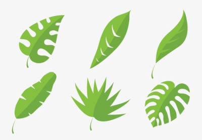 Different Leaf Shapes, Leaf Vector, Irregular Green Leaves ...