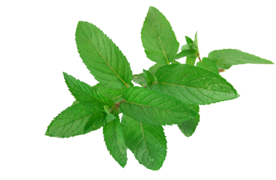 Mint PNG Free Download