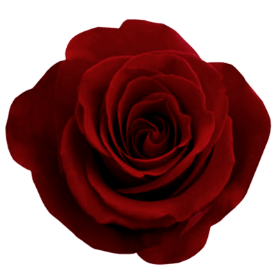 Red Rose Png Image Picture Download