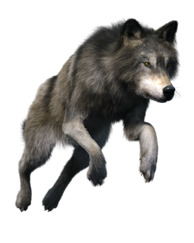 Free stock PNG: Wolf by ArtReferenceSource on DeviantArt