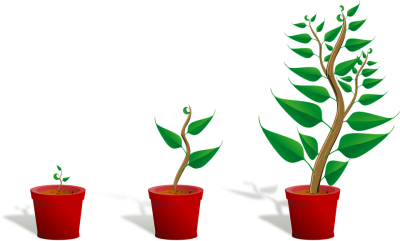 Growing Plant HD Image Free PNG