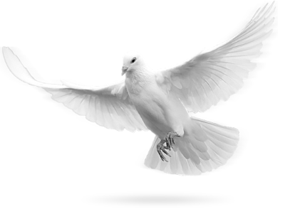 Dove Transparent PNG Pictures   Free Icons and PNG Backgrounds