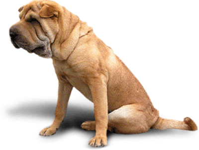 Dog Png Image Picture Download Dogs