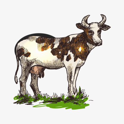 A Cow, Cow Clipart, White, Brown PNG Image and Clipart for Free Download