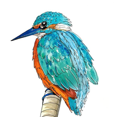 Kingfisher Picture HQ Image Free PNG