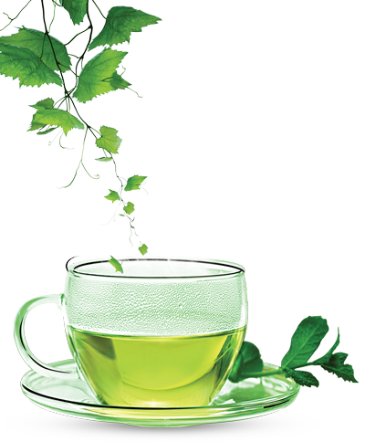 Green Tea PNG Clipart