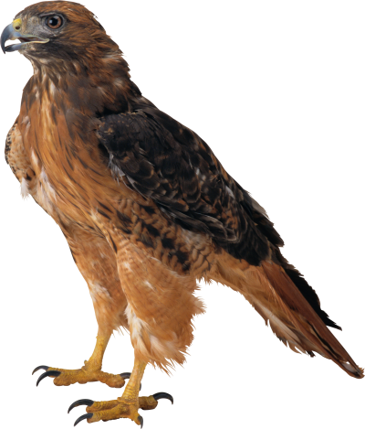 background-Eagle-transparent