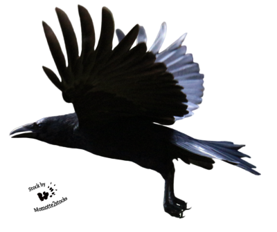 Raven Flying PNG Clipart