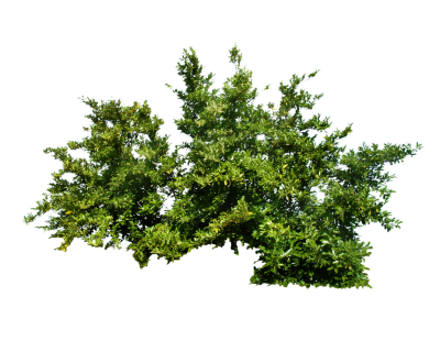 Plants PNG Transparent Picture