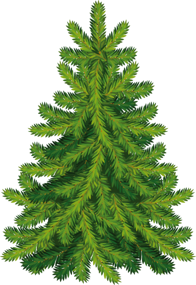 background-tree-Fir-transparent