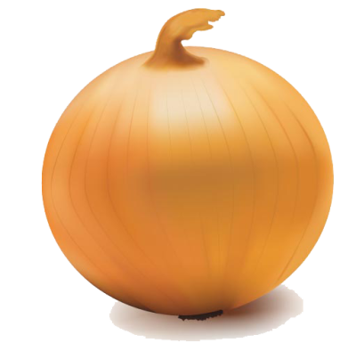Onion Vector Transparent