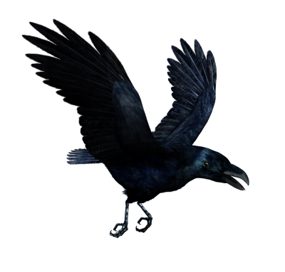 Common Raven Transparent Images PNG