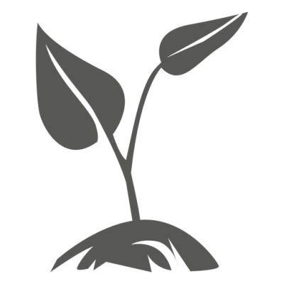 Growing Plant PNG Pic