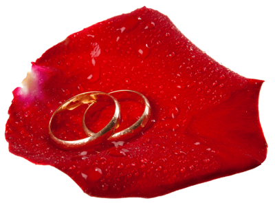 wedding-rings-in-rose-petal