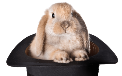 rabbit-hat-png