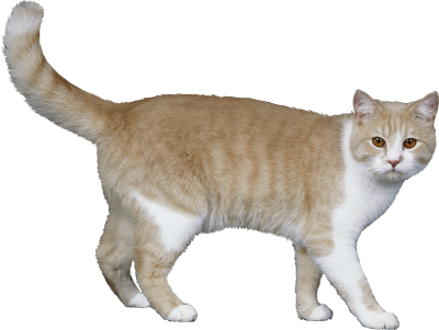 Cats-background-Cat-transparent
