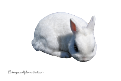 White Rabbit Clipart