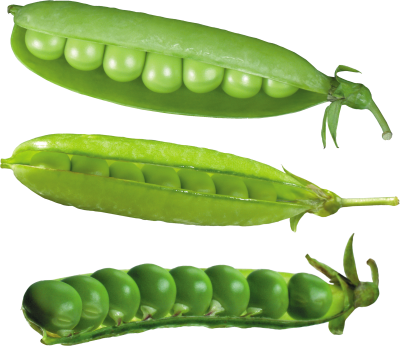 background-Pea-transparent