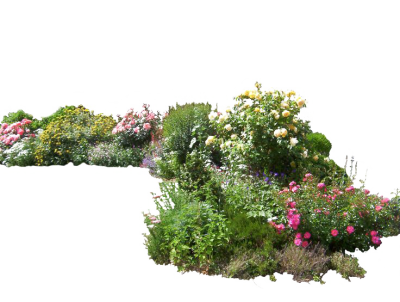 Plants PNG Photo