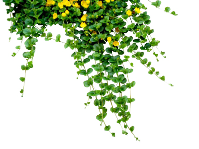 Plants PNG Free Download