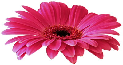 Gerbera Free Download