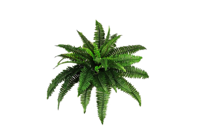 Plants PNG Transparent
