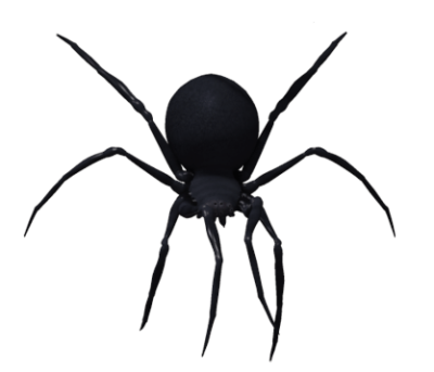 Black Widow Spider Png Image