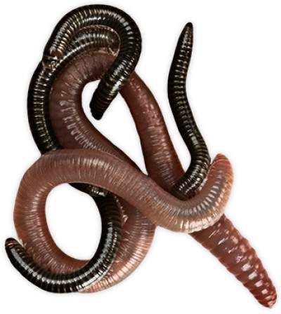 Worms Png Pic