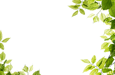 Green Leaves Frame Png