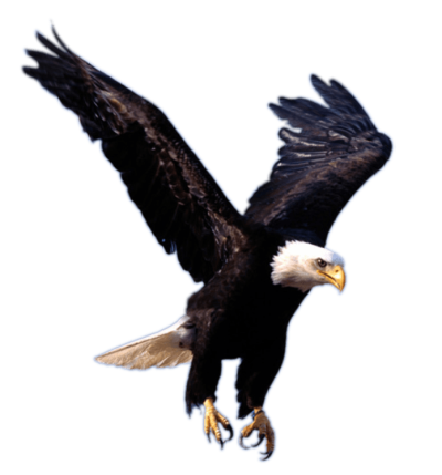 Flying Eagle Png Image Download
