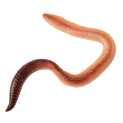 worm-earthworm-background-transparent-Worms