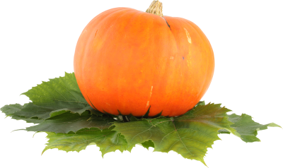 Pumpkin-background-transparent
