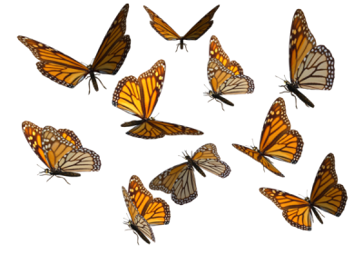 Butterflies Swarm Transparent Background