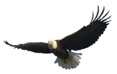 background-flying-eagle-transparent