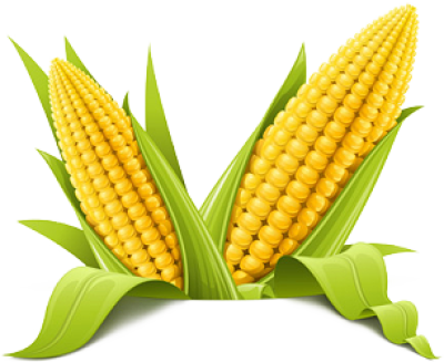 Corn Png Picture