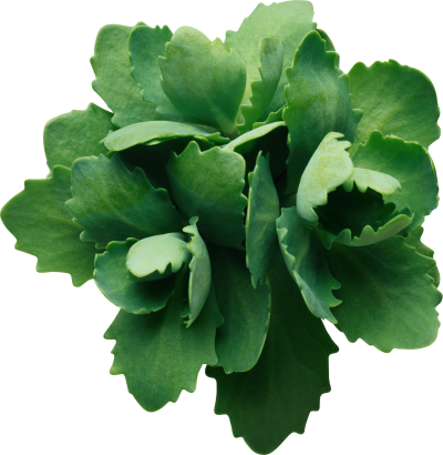 Green Leaf Png