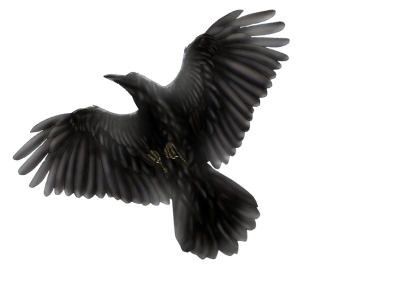 Common Raven PNG Transparent Image