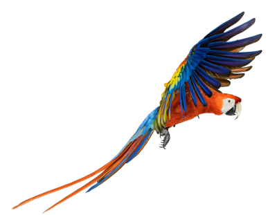 Macaw Png Pic