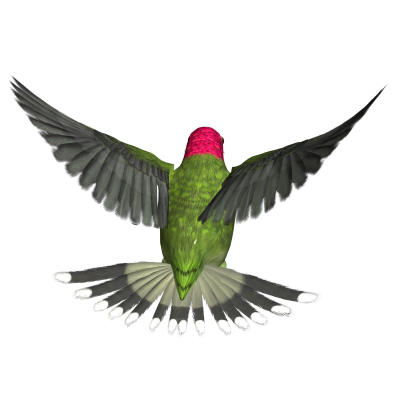 Hummingbird Png Hd