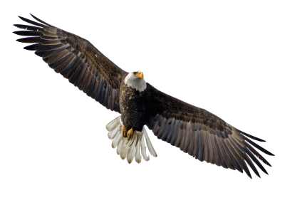 Soaring Eagle Transparent
